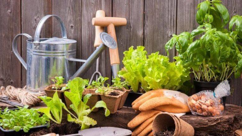 Fem smarta presenttips inom trädgård